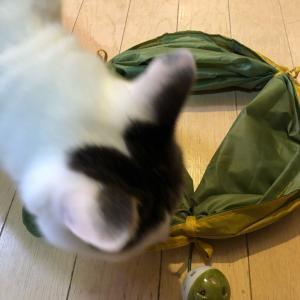 スリーコインズにて猫おもちゃ。