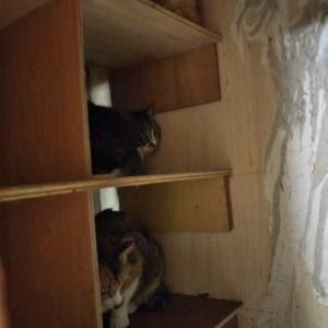 隠れっこマンション
