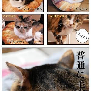 猫ワッサン完結編