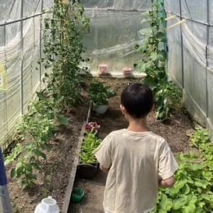 野菜の収穫をする男☆