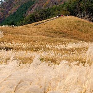 奈良県 曽爾高原とボーダーコリー①。
