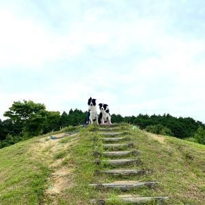 三重県津市にある津観音寺さんと鈴鹿パーキングエリアのドッグラン。