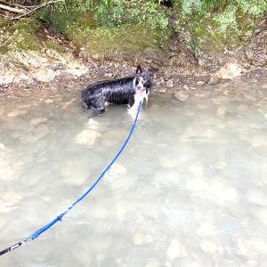 滝畑ダムで川遊びとボーダーコリー。