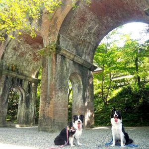 京都街歩き 南禅寺水路閣とボーダーコリー。