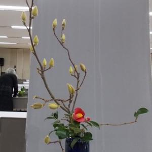 heika   瓶花