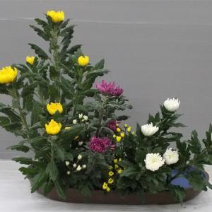 色彩盛花様式本位 菊7.5.5小菊色違い