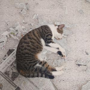 【保護猫 福ちゃん⑩】やんちゃすぎる。