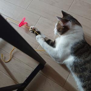 【保護猫 福ちゃん】いたずら。