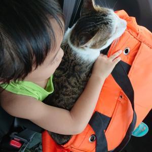 【保護猫 福ちゃん】車で産まれ故郷へ。