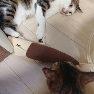 保護猫 福ちゃん⑨おもちゃ