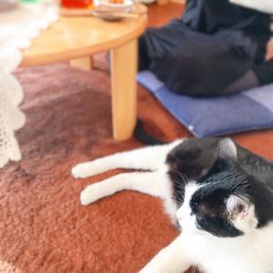女性と猫の温活習慣