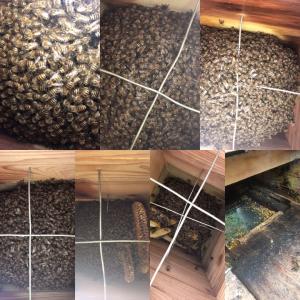 ニホンミツバチと2年目の冬
