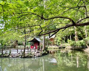 小國神社で森林浴