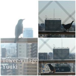 よくやってくる美声の鳥
