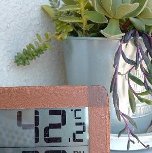 危険な暑さ