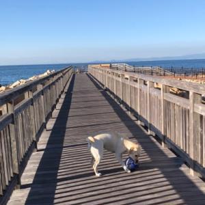 秋 海辺の散歩 ちょっと嬉しい(^_^*)
