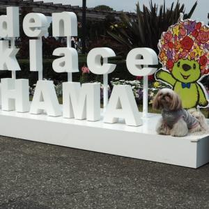 19年3月28日(木)横浜お花見散歩☆