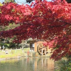 楽書き雑記「名古屋・東山植物園の紅葉を見てきました」