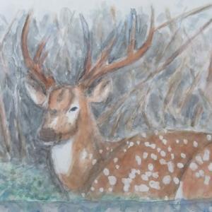 (楽描き水彩画「角の大きさは心の大きさ=名古屋・東山動物園のアクシスジカを描きました」)