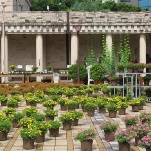 楽書き雑記「名古屋のフラリエ②鉢植えで彩るミリオンベルの庭」