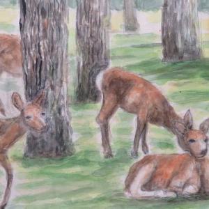 楽描き水彩画「奈良公園のシカたち」