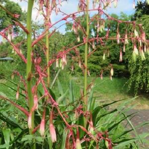 楽書き雑記「増えています秋の花=名古屋市農業センター」