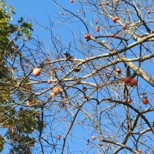 楽書き雑記「散歩道の木の実たち」