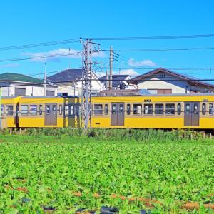 台風翌日の午後は西武多摩川線を撮影する。