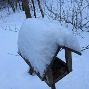 ツルヤ行って大雪の予報に備える