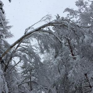 大雪とあんこ玉