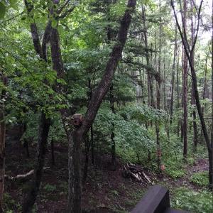 雨続きの森暮らし