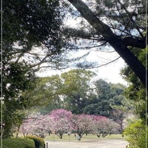 梅の花 2021♪