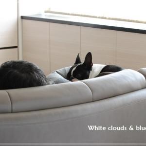 犬との暮らし♪