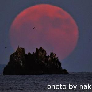弥八島に満月