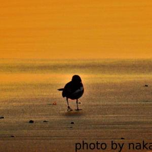 渚のさんぽ