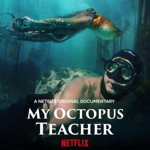 「オクトパスの神秘: 海の賢者は語る」 命の円環を感じさせる秀逸ドキュメンタリ