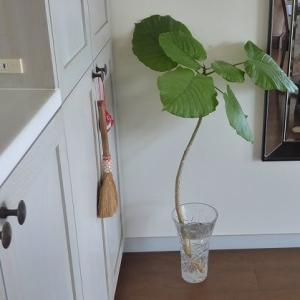 花を買ったり植え替えしたり♪ 退屈なコロナ日記 36,37日目