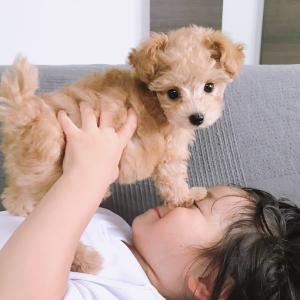 ★犬との暮らし。☆