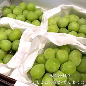 ふるさと納税【佐賀県武雄市】佐賀県産シャインマスカット 約2kg