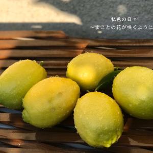 テラスで育てたレモンの収獲♪