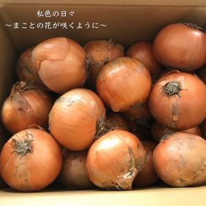 ふるさと納税【北海道栗山町】越冬用減農薬玉ねぎ10kg