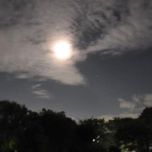 十五夜お月さん撮って見ました