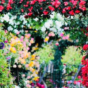 今月の開花さんと休養さんは・・(2021.8)