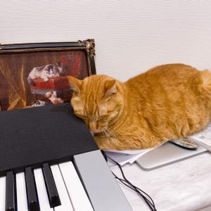*猫とピアノ*
