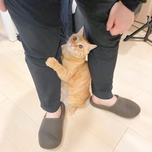 *猫かわいがり*