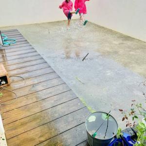【台風九号と台風10号の台風対策】ベランダガーデニングが壊滅的に‼️