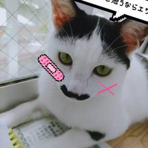【保護猫ソノちゃん】インテリ美人✨
