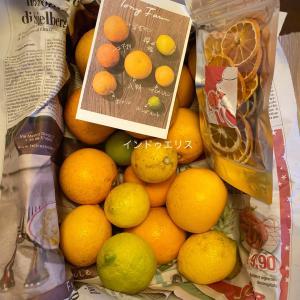 瀬戸内の柑橘