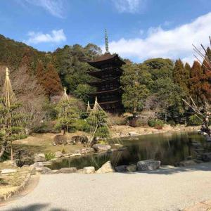 梅を観に行きました!山口県瑠璃光寺