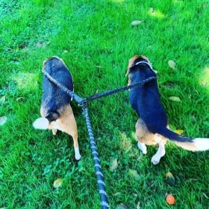 Dual Dog Leash 二匹用リーシュ